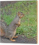 Squirrel Wood Print by Linda Larson