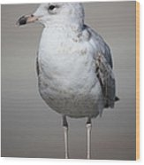 Standing Seagull Wood Print by Carol Groenen
