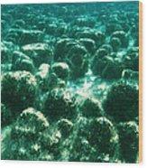 Stromatolites Wood Print by Peter Scoones