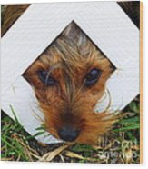 Stuck On You Wood Print by Karen Wiles