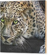 Sundari Wood Print by Big Cat Rescue