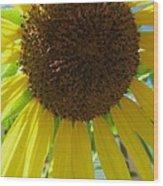 Sunflower-two Wood Print by Todd Sherlock
