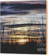 Sunset Grasses Wood Print by Sandra Cockayne