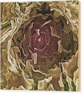 Sweat Pore, Sem Wood Print by Steve Gschmeissner