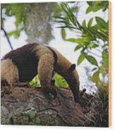 Tamandua Wood Print by Bruce J Robinson