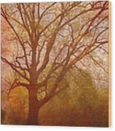The Fairy Tree Wood Print by Brett Pfister