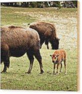 The Mighty Bison Wood Print by Ellen Heaverlo