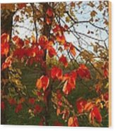 The Reds Of Autumn Wood Print by Julie Dant