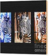 The Three Zebras Black Borders Wood Print by Rebecca Margraf