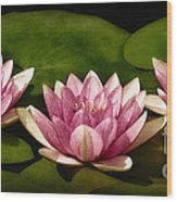 Three Water Lilies Wood Print by Susan Candelario