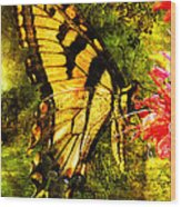 Tiger Swallowtail Butterfly Happily Feeds Wood Print by J Larry Walker