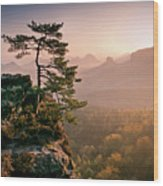 Tree In Morning Llght In Saxon Switzerland Wood Print by Andreas Wonisch