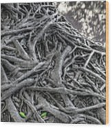 Tree Roots Wood Print by Natthawut Punyosaeng