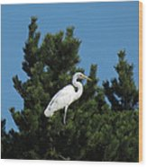 Treed Wood Print by Chris Anderson