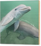 Two Dolphins Underwater. Wood Print by Justin Lewis