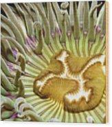 Under Water Anemone Wood Print by Lucidio Studio, Inc.