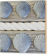 Usa, New York State, New York City, Brooklyn, Collection Of Seashells Wood Print by Jamie Grill