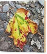 Vermont Foliage - Leaf On Earth Wood Print by Elijah Brook