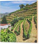 Vineyard Landscape Wood Print by Carlos Caetano