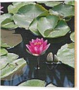 Water Lilies Wood Print by Jennifer Ancker