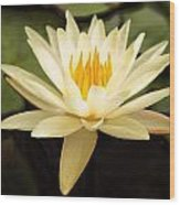 Water Lily Wood Print by Darren Fisher