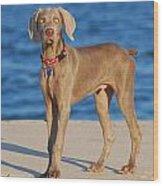 What - Weimaraner Puppy Wood Print by Angie Tirado