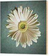 White Daisy Wood Print by Tamyra Ayles