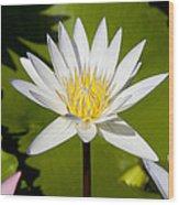 White Lotus Wood Print by Kelley King