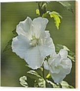 White Rose Of Sharon Wood Print by Teresa Mucha