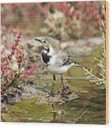 White Wagtail Wood Print by Photostock-israel