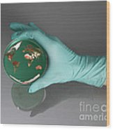 World Inside A Petri Dish Wood Print by Photo Researchers