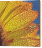 Yellow Wild Flower Wood Print by the*Glint