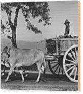 Zebu Cart Wood Print by Richard Harrington