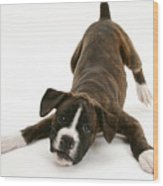 Brindle Boxer Pup Wood Print by Jane Burton