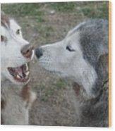 Dog Breath Wood Print by Lynda Dawson-Youngclaus