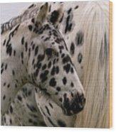 Knabstrupper Foal Wood Print by Michael Mogensen