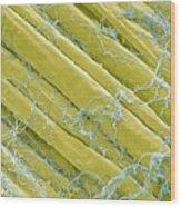 Optic Nerve Fibres, Sem Wood Print by Steve Gschmeissner