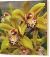 Orchid 9 Wood Print by Marty Koch