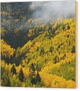 Quaking Aspen And Ponderosa Pine Trees Wood Print by Ralph Lee Hopkins