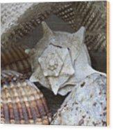 Seashells Wood Print by Frank Tschakert