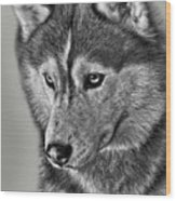 Siberian Husky 2 Wood Print by Larry Linton