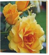 Yellow Roses Wood Print by Amy Fose