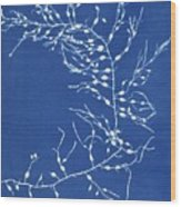 19th-century Alga Cyanotype Wood Print by Spencer Collectionnew York Public Library