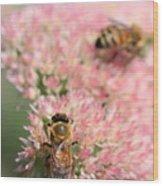 2 Bees Wood Print by Angela Rath