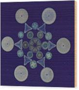 Diatom Arrangement Wood Print by M. I. Walker