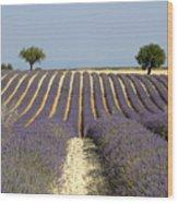 Field Of Lavender. Provence Wood Print by Bernard Jaubert