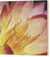 Pink Water Lily Wood Print by Bill Brennan - Printscapes