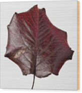 Red Leaf 4 Wood Print by Robert Ullmann
