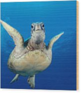 Green Sea Turtle Wood Print by Dave Fleetham - Printscapes