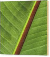 Banana Leaf Wood Print by Heiko Koehrer-Wagner